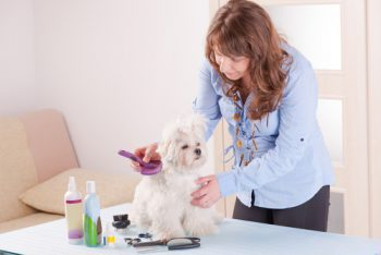 dog grooming equipment