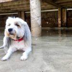 Cahaba Beach Dog Park Gus