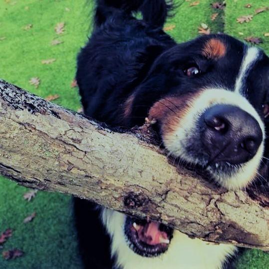 Cahaba Beach Dog Park dog with stick